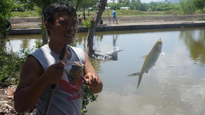 Ini Wisata Memancing Asyik yang Ditawarkan Pemancingan Kampung Tambak Garam di Maumere