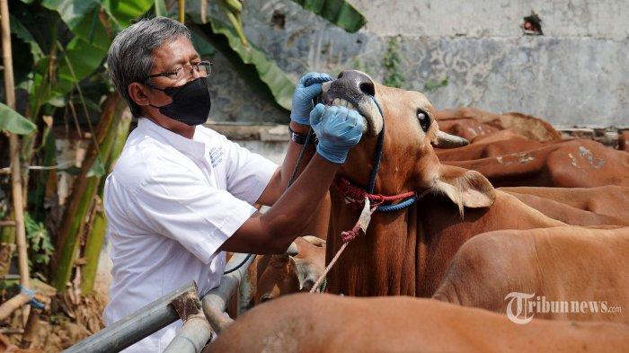 Panduan Pelaksanaan Penyembelihan Hewan Kurban dari Kemenag: Wajib Terapkan Prokes dan Kebersihan