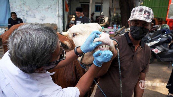 Tim dokter dari Suku Dinas Ketahanan Pangan Kelautan dan Perikanan (KPKP) Jakarta Timur memeriksa kesehatan hewan kurban di salah satu tempat penjualan hewan kurban di Jalan I Gusti Ngurah Rai, Jakarta Timur, Kamis (15/7/2021).