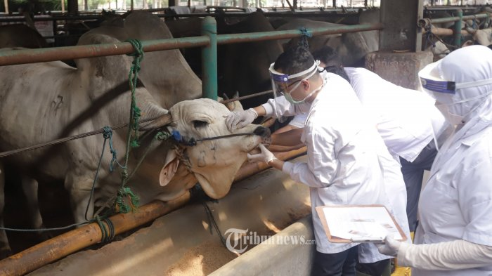 Tips dan Cara Memilih Hewan Kurban Sesuai dengan Anjuran Dinas Peternakan dan Kesehatan Hewan