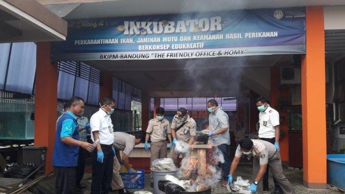Puluhan Kilogram Ikan Tak Bertuan Pasokan dari Makassar Dimusnahkan