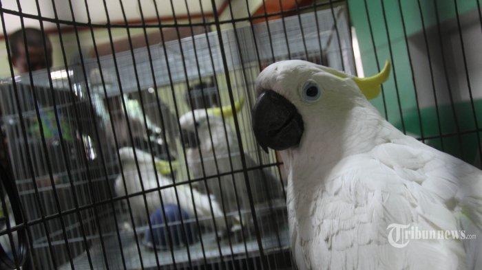 Burung Beo Belanja Makanan Kesukaannya Lewat Amazon Alexa Saat Ditinggal Pemiliknya Di Rumah Tribunnews Com Mobile