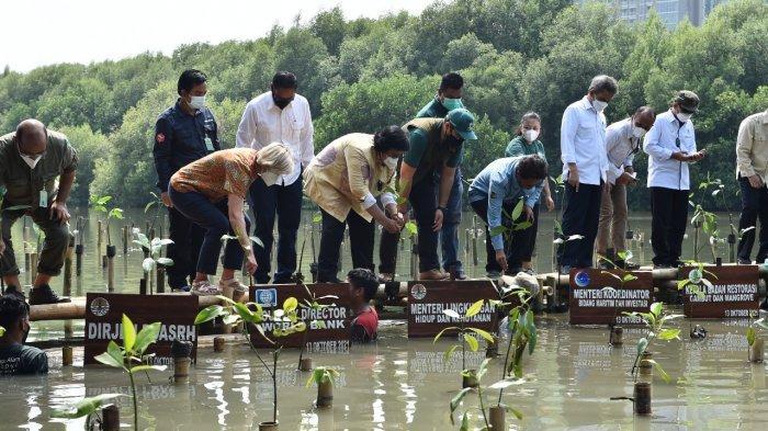 Pengelolaan Mangrove Perlu Dilaksanakan secara Terintegrasi dengan Perencanaan yang Baik