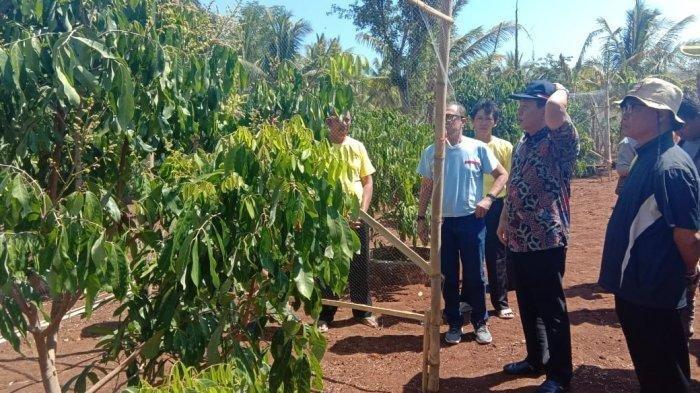 Pendiri yayasan Mahisa agni <a href='https://pontianak.tribunnews.com/tag/wahyu-purwanto' title='WahyuPurwanto'>WahyuPurwanto</a> saat meninjau kebun buah penghormonan, Senin (29/7/2019).