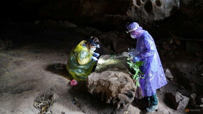 Peneliti mengumpulkan sampel dari kelelawar di Kamboja.