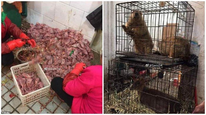 Penemuan beberapa binatang eksotis di pasar makanan kota Wuhan, Cina dianggap sebagai biang utama dalam wabah Coronavirus atau virus Corona mematikan.