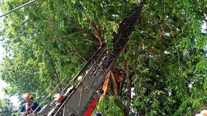 Petugas sedang mengevakuasi seorang penerjun paramotor gagal landas hingga tersangkut di sebuah pohon beringin Jalan Tapaksiring Surabaya, Sabtu (12/10/2019) pagi.