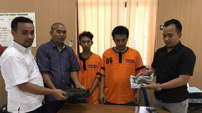 Dua Pengedar Ganja di Lampung Utara Ini Teriaki Polisi Maling Saat Mau Ditangkap