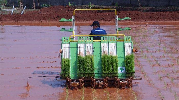 Manfaat Alsintan Rice Transplanter Untuk Pertanian Tribunnews Com Mobile