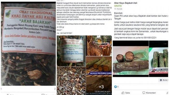 Informasi seputar penjualan kayu bajakah yang dikabarkan manjur untuk mengobati kanker payudara bereda