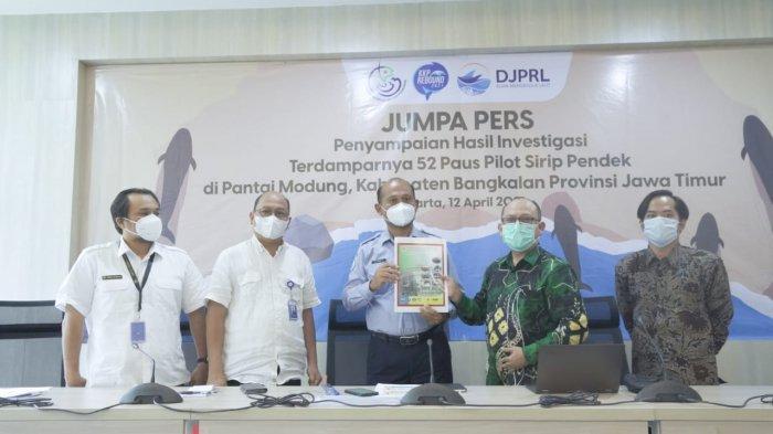 konferensi pers Penyampaian Hasil Investigasi Kejadian Terdamparnya 52 Ekor Paus Pilot Sirip Pendek di Jakarta, Senin (12/4/2021).