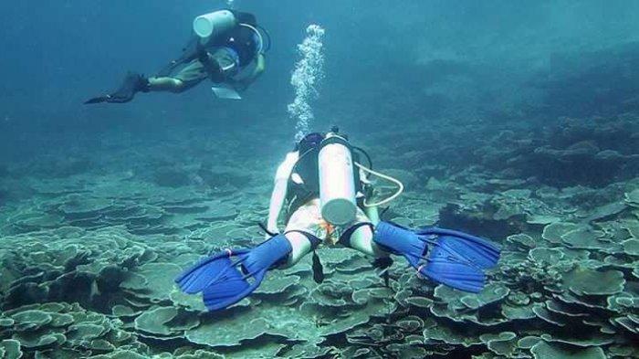 Mulai Juli 2020, Wakatobi Bakal Sambut Kunjungan Wisatawan