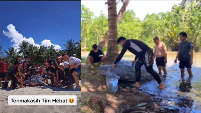 VIRAL Penyelamatan Penyu Kembali ke Laut, Pengunggah Inisiatif Bantu karena Tergolong Hewan Langka