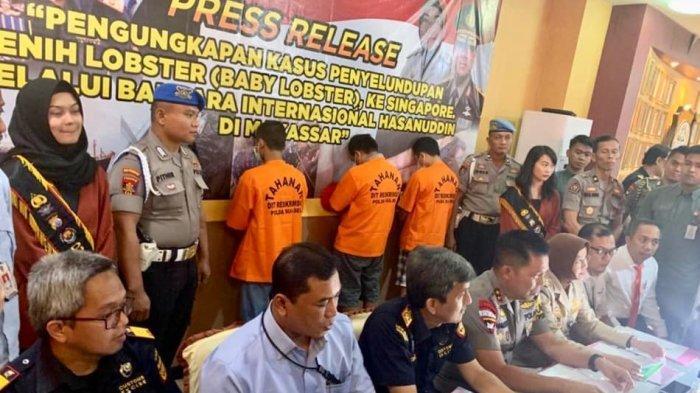 Aparat Penegak Hukum Bea Cukai Makassar Gagalkan Penyelundupan 19 Ribu Baby Lobster
