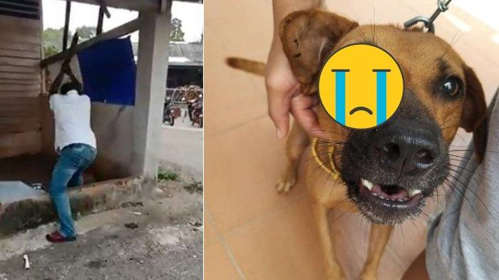 VIRAL Video Pria Tak Dikenal Aniaya Anjing yang Dirantai hingga Penuh Darah hanya karena Digonggongi