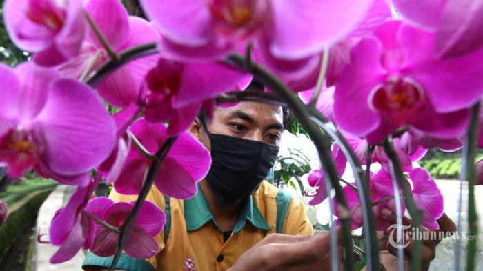 Dari Hobi Menyenangkan Saat Pandemi, Menanam Bunga Anggrek Bisa Jadi Inspirasi Bisnis
