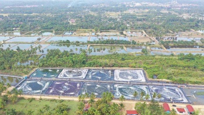 Jalin Kesepakatan dengan Pemerintah Daerah, KKP Garap Lahan Percontohan Kawasan Tambak Udang Baru