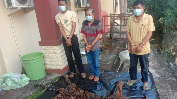 Polisi Tangkap 3 Pelaku Perdagangan Organ dan Kulit Harimau Sumatera di Bengkulu Selatan