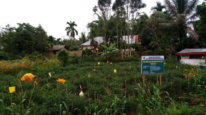 Perdana di Sumbar, Jambore Organik Kampanyekan Pangan Sehat