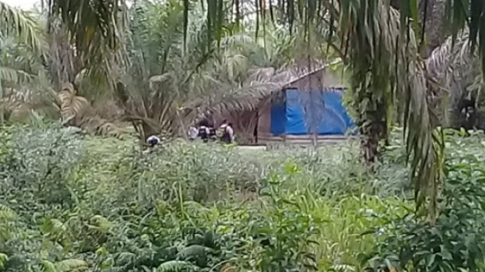 Sebuah Gubuk Kayu Dikepung Anggota Polda Riau Bersenjata Lengkap, ini Sebabnya
