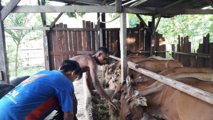 Pertamina Bina Lebih dari 7500 Binaan Sektor Perikanan dan Peternakan