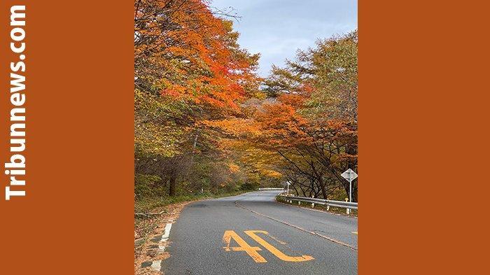 Suasana perubahan warna daun di Takayama Perfektur Gifu di Jepang.