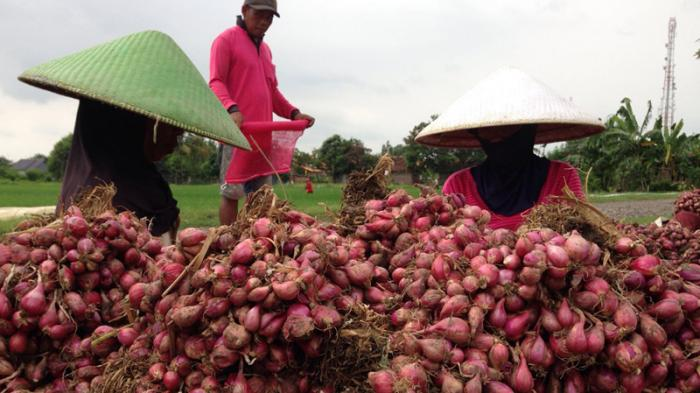 Sektor Pertanian Saat Pandemi Tetap Berkembang, Tapi Kurang Disayang