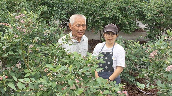 Kiyoshi Asami (kiri) beserta putrinya, petani perkebunan Blueberry di Nerimaku Tokyo Jepang.