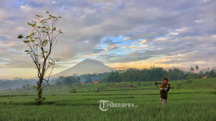 Nilai Tukar Petani di November Naik 0,6 Persen, Tertinggi di Riau