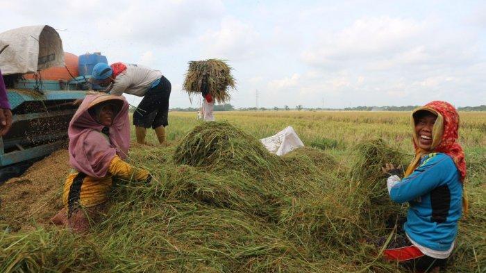 Bantu Petani saat Musim Kemarau, Jasindo Siapkan Asuransi Sawah