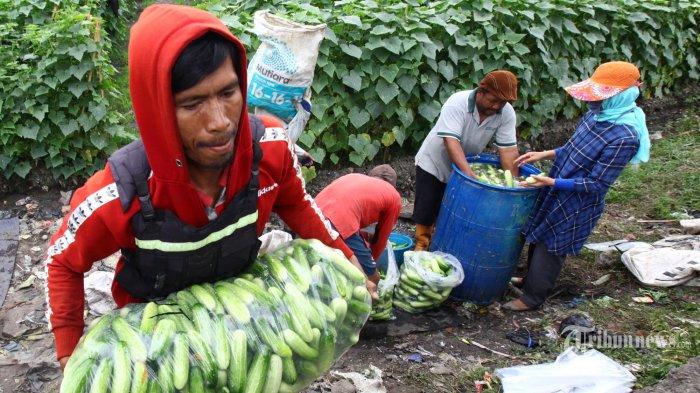 Kementan Terus Sosialisasikan Peluang Pendanaan untuk Petani