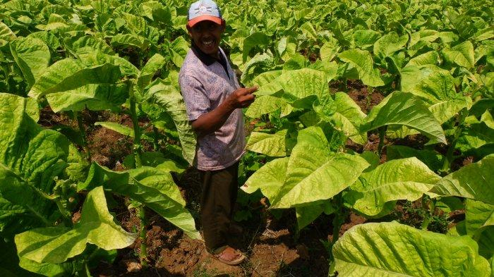 Pemerintah Diminta Perhatikan Eksistensi Industri Tembakau