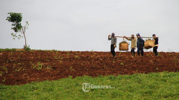 UNDP Tingkatkan Produktivitas Koperasi Sektor Pertanian