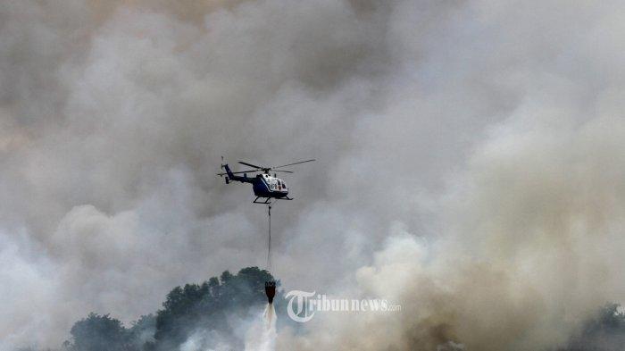 Hampir 5 Juta Lahan Makin Kritis di Kaltara, Dana Reboisasi Ratusan Miliar Mengendap di Bank