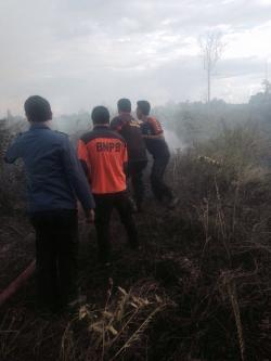 Lima Hektare Lahan Gambut di Tanjung Jabung Barat Terbakar