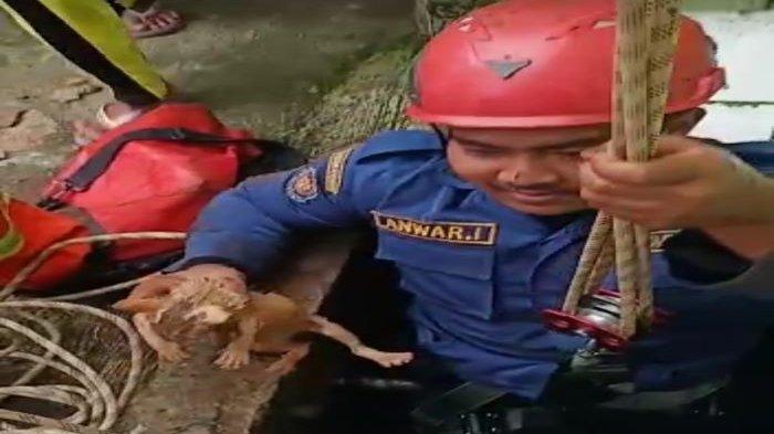 Aksi Petugas Damkar Selamatkan Anak Kucing dari Sumur 15 Meter di Bogor Berlangsung Mengharukan
