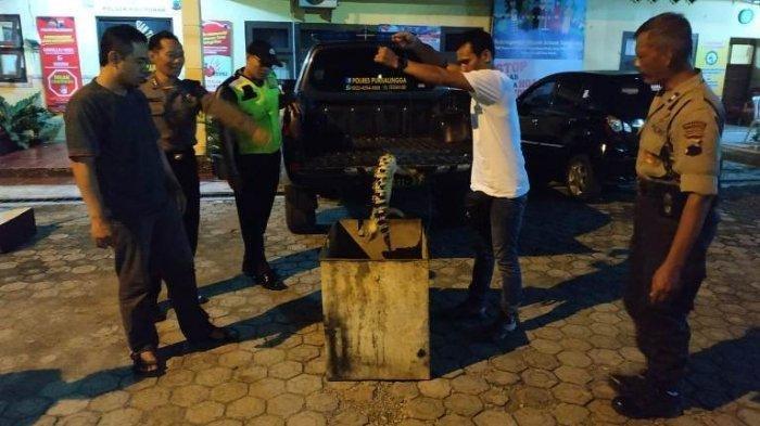 Petugas Polsek Kalimanah membawa buaya yang menggigit petani Selabaya, Purbalingga, Senin (30/12/2019) malam.