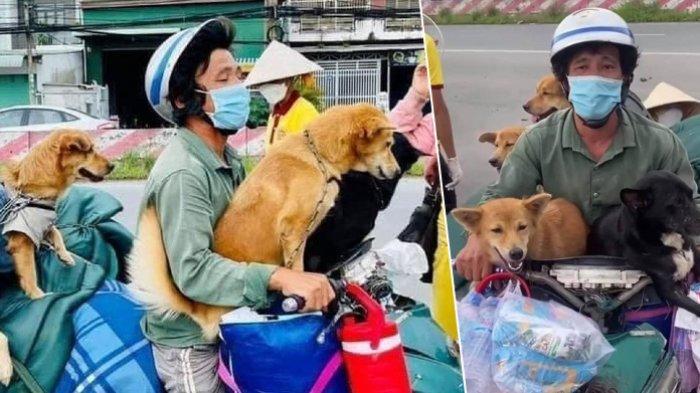Pemiliknya Sedang Dirawat karena Covid-19, 12 Anjing di Vietnam Dibunuh Petugas