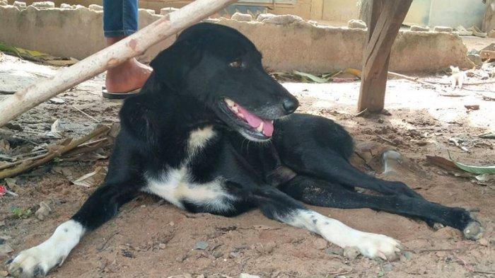 Bayi Mungil Dikubur Hidup-hidup oleh Ibunya Sendiri, Nyawanya Diselamatkan oleh Seekor Anjing Lumpuh