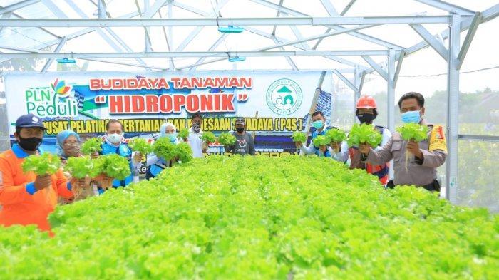 PLN Salurkan Rp 4,8 Miliar Bantu Petani di 54 Lokasi Lewat Program Electrifying Agriculture