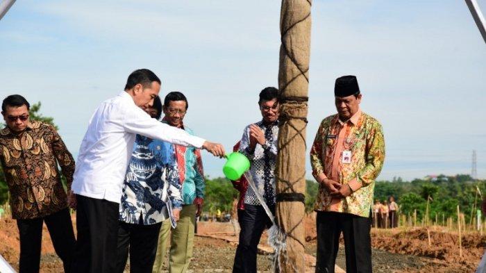 Pohon Marsawa yang Secara Simbolis Ditanam Presiden Sudah Berusia 16 tahun