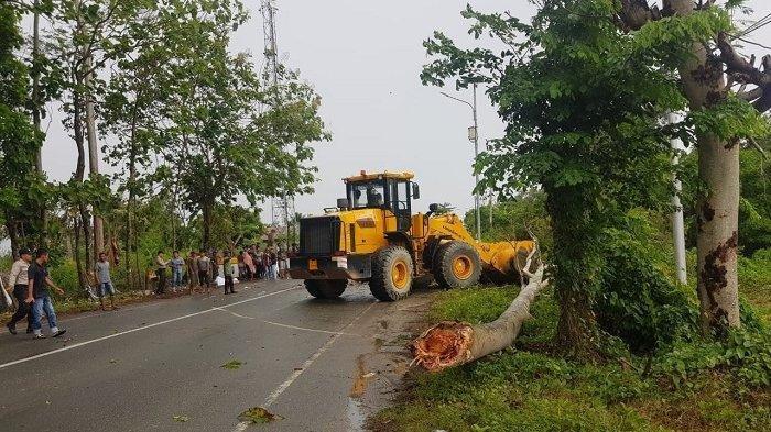 Alat berat membersihkan pohon tumbang di badan Jalan Banda Aceh - Meulaboh, Gampong Nusa, Kecamatan Lhoknga, Aceh Besar, yang menyebabkan kemacetan, Sabtu (20/7/2019). Peristiwa itu mengakibatkan korban jiwa seorang warga akibat tertimpa pohon tersebut. SERAMBINEWS.COM/MISRAN ASRI