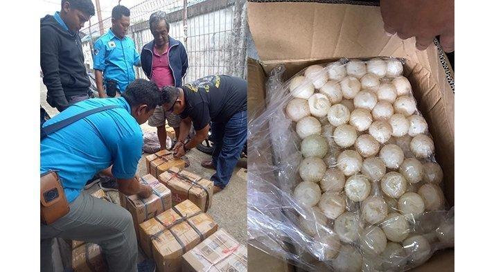 Polda Kalbar Gagalkan Penyelundupan 3.274 Butir Telur Penyu dari Kepri