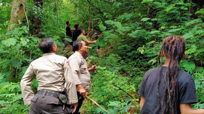 Kawanan Monyet Liar Serbu Lahan Pertanian di Boyolali, Warga Kewalahan hingga Polisi Turun Tangan