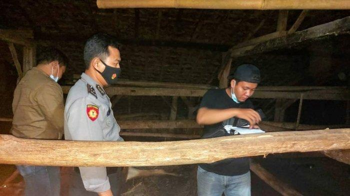 Dua Ekor Sapi Limosin yang Tengah Mengandung Tiba-tiba Mati, Pemiliknya Rugi Rp 40 Jutaan