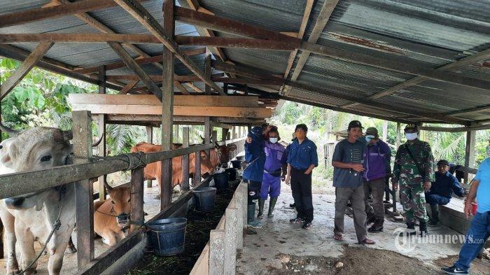 Satgas Pamtas RI-PNG Yonif Mekanis Raider 413 Kostrad Pos Kout KM 31 bersama Dinas Kesehatan Kab. Keerom melaksanakan pemeriksaan kesehatan hewan ternak Sapi, bertempat di Kampung Yamana Distrik Arso Kabupaten Keerom. Distrik Muara Tami Kota Jayapura, Papua, Selasa (23/02/2021). (TRIBUNNEWS/PUSPEN TNI) *** Local Caption ***  Ternak