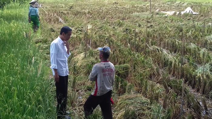 Jokowi Mendadak Turun Mobil di Tengah Perjalanan Lalu Ajak Bicara Petani