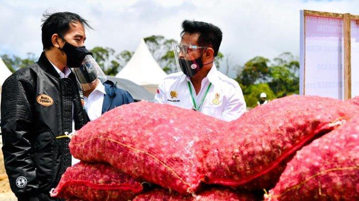 Presiden Jokowi didampingi Mentan SYL Tinjau Food Estate di Kabupaten Humbahas