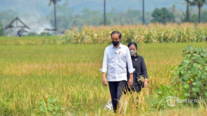 Jokowi Bertolak ke Provinsi Jawa Timur, Tinjau PPDI Brondong dan Berdialog dengan Nelayan