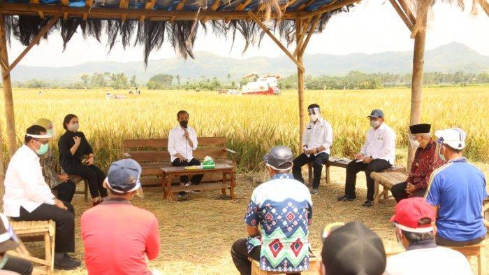 Presiden Jokowi Tinjau Panen Raya Padi di Kabupaten Malang